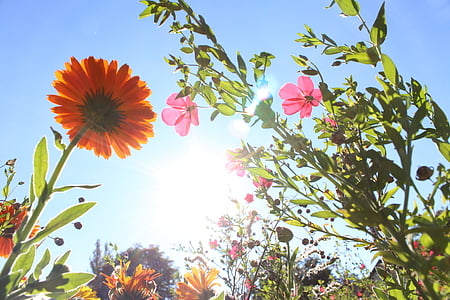 worms-eyeview of petaled flowers under blue sky