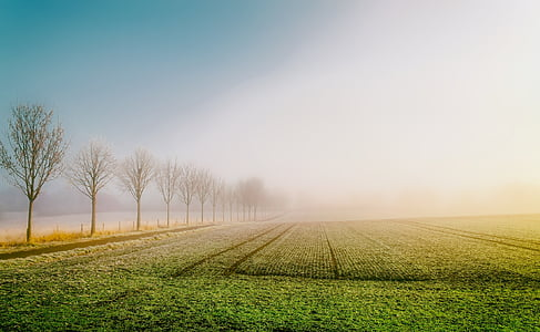 landscape photography of grass field during daytime