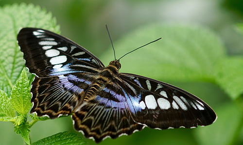 photo of black and white butterfly
