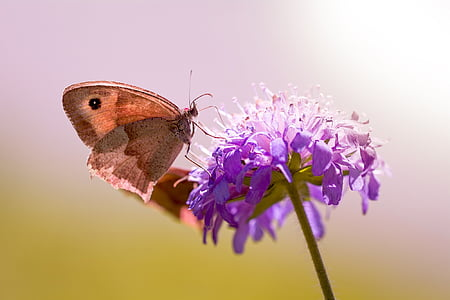 focused photo of brown butterfly on top of purple flower