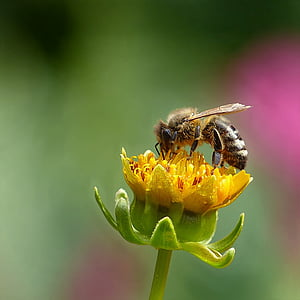 honey bee perching on yellow flower in close-up photography