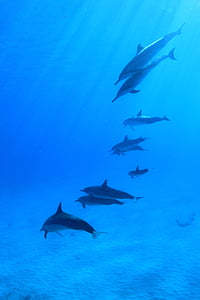 dolphins on body of water