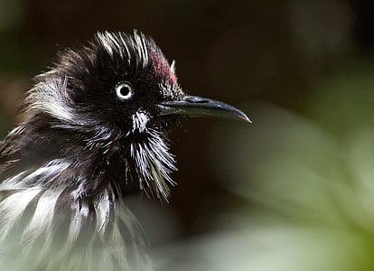 close up photographyblack and white bird
