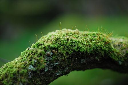 moss on brown log