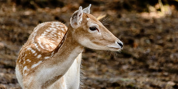 close-up photo of brown and white deer