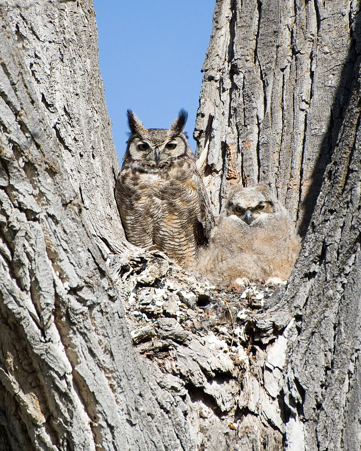 two brown owl on brown tree