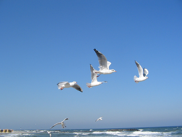 flock of seagulls flying over body of water during daytime