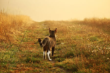 grey and white cat walking on green grass