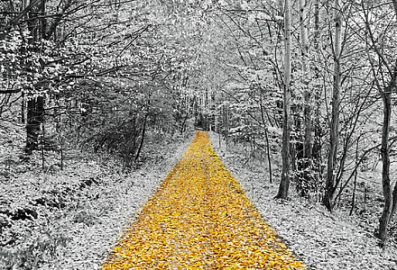 selective color photography of leaves and trees
