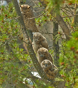 four brown owls on tree trunk