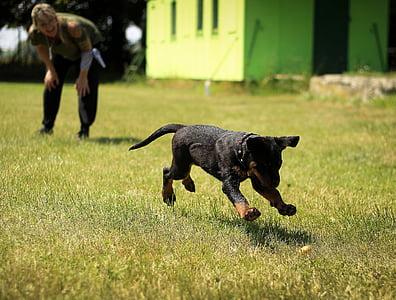 short-coated black and tan dog running at green graass