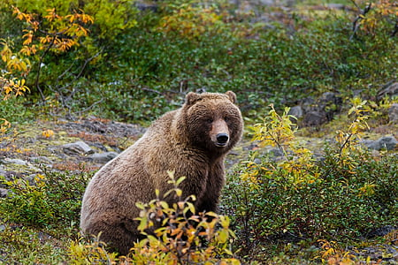bear sitting down with leaves