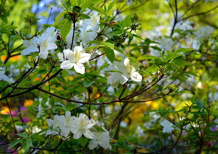 white flowering tree in bloom
