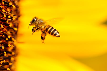 macro shot photography of honey bee near flower