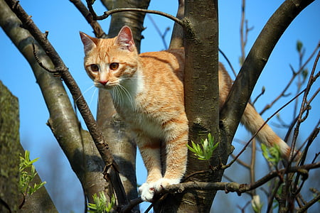 orange Tabby cat on tree branch during daytime