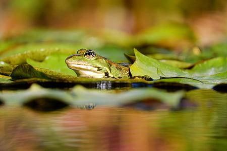 green frog on leaf in daytime