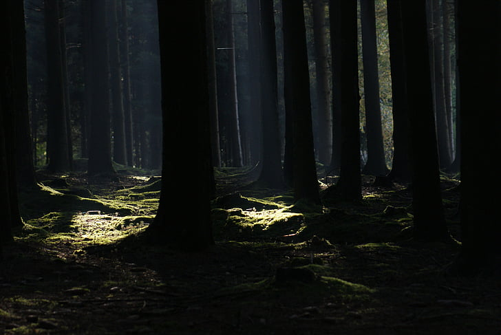 photo of forest during dusk