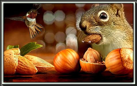 squirrel eating hazelnut and almond facing hummingbird