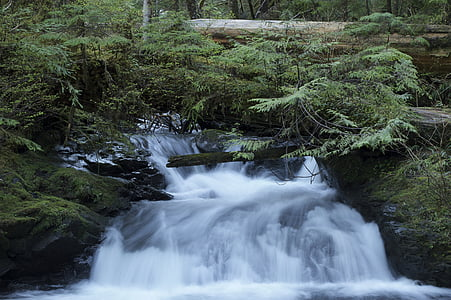 time lapse photography of river beside trees