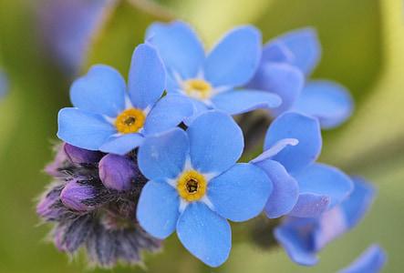 blue petaled flowers