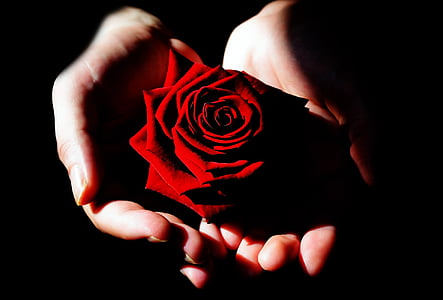 red rose in person's hand