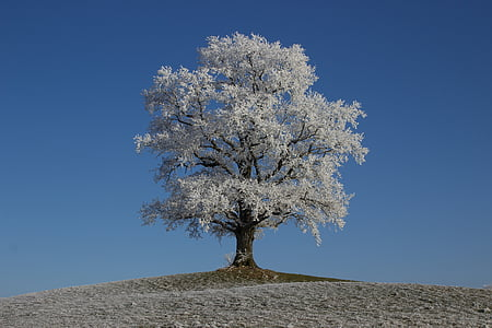white leafed tree on top of mound at daytime