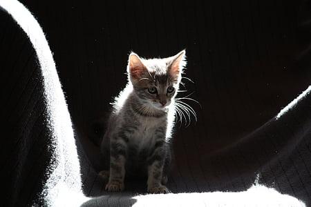 silver tabby kitten on gray surface
