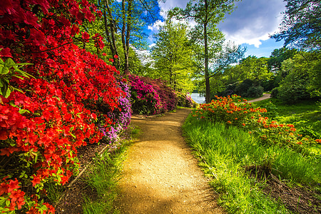 flowers and plants beside brown pathway
