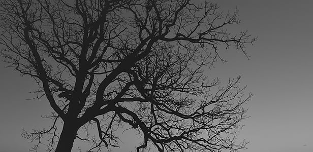 leafless tree silhouette during night time