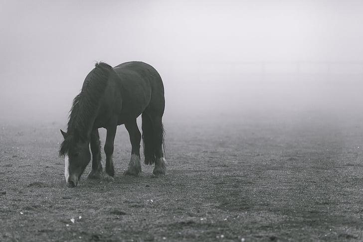 horse standing in mist