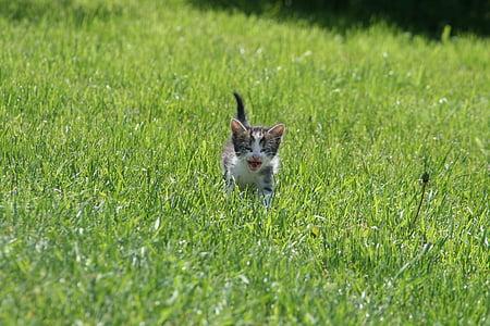 gray tabby kitten running on grass at daytime