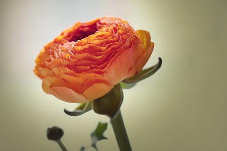 orange cluster flower