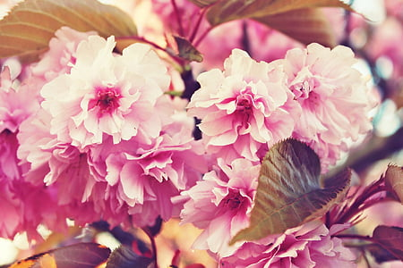 pink and white petaled flower photography