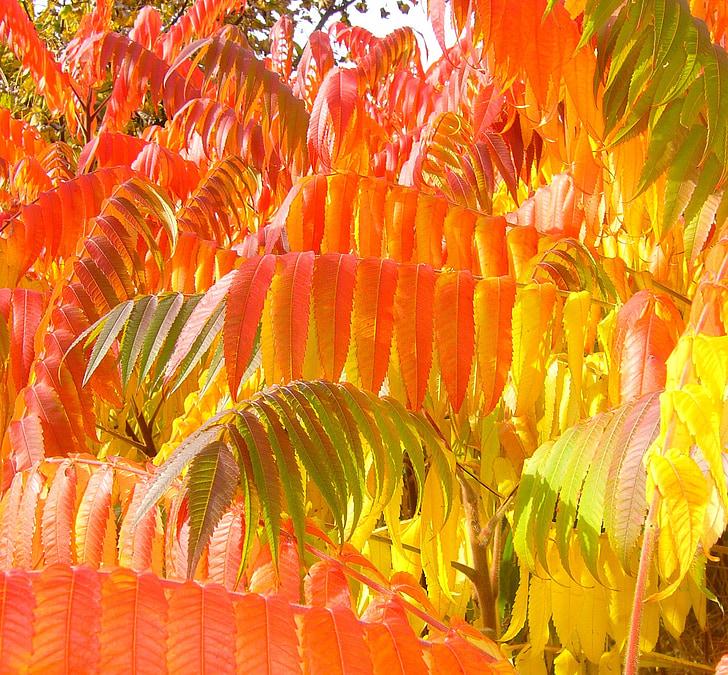 orange leafed tree