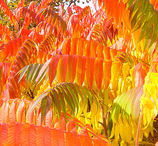 orange leafed tree