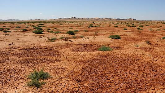 green grasses on brown dry soil