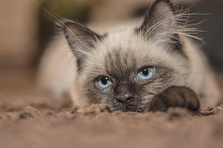 closeup photo of white and black cat