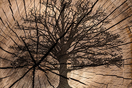 brown tree painted board decor