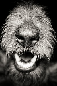 grayscale photography of dog snout