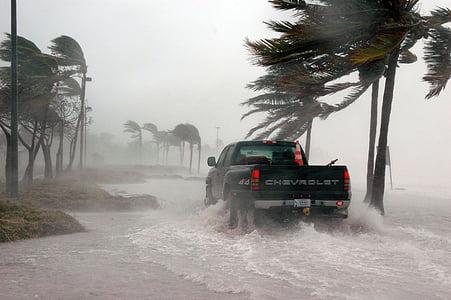 black Chevrolet pickup truck beside coconut palm tree