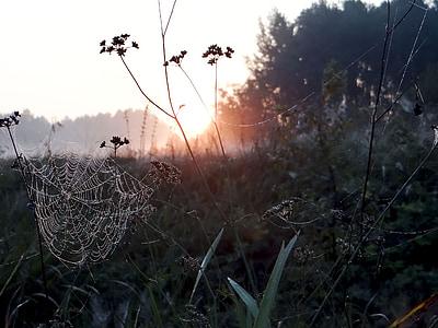 spiderweb during sunrise