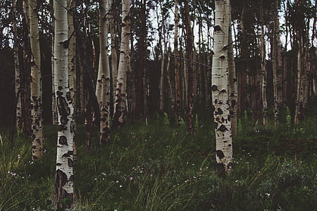 brown wooden trees
