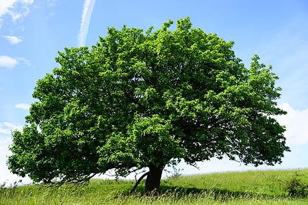 green leaf tree under blue sky wallpaper