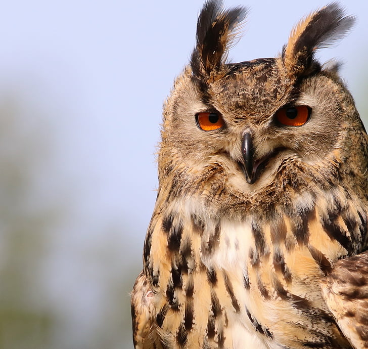 photo beige and black owl