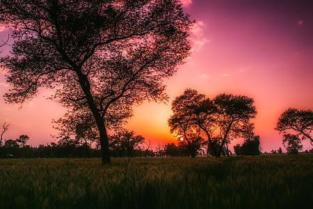silhouette of trees at golden hour