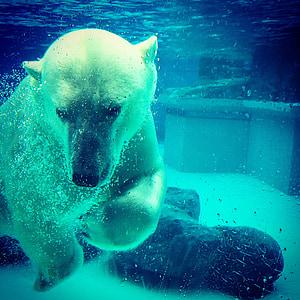 photo of polar bear underwater