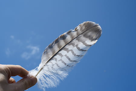white and black feather