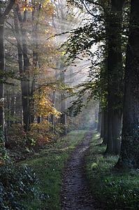 sunlight on yellow leaf trees