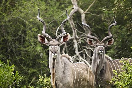 brown and gray deer standing near bush