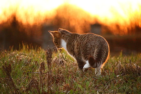 brown Tabby cat on green grass field